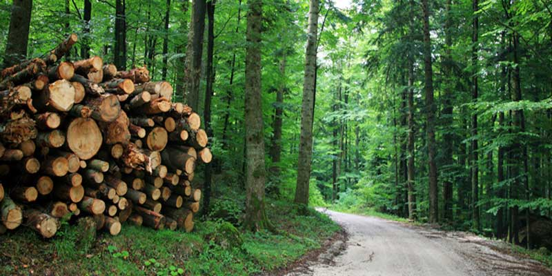 Weekly forest conservation updates